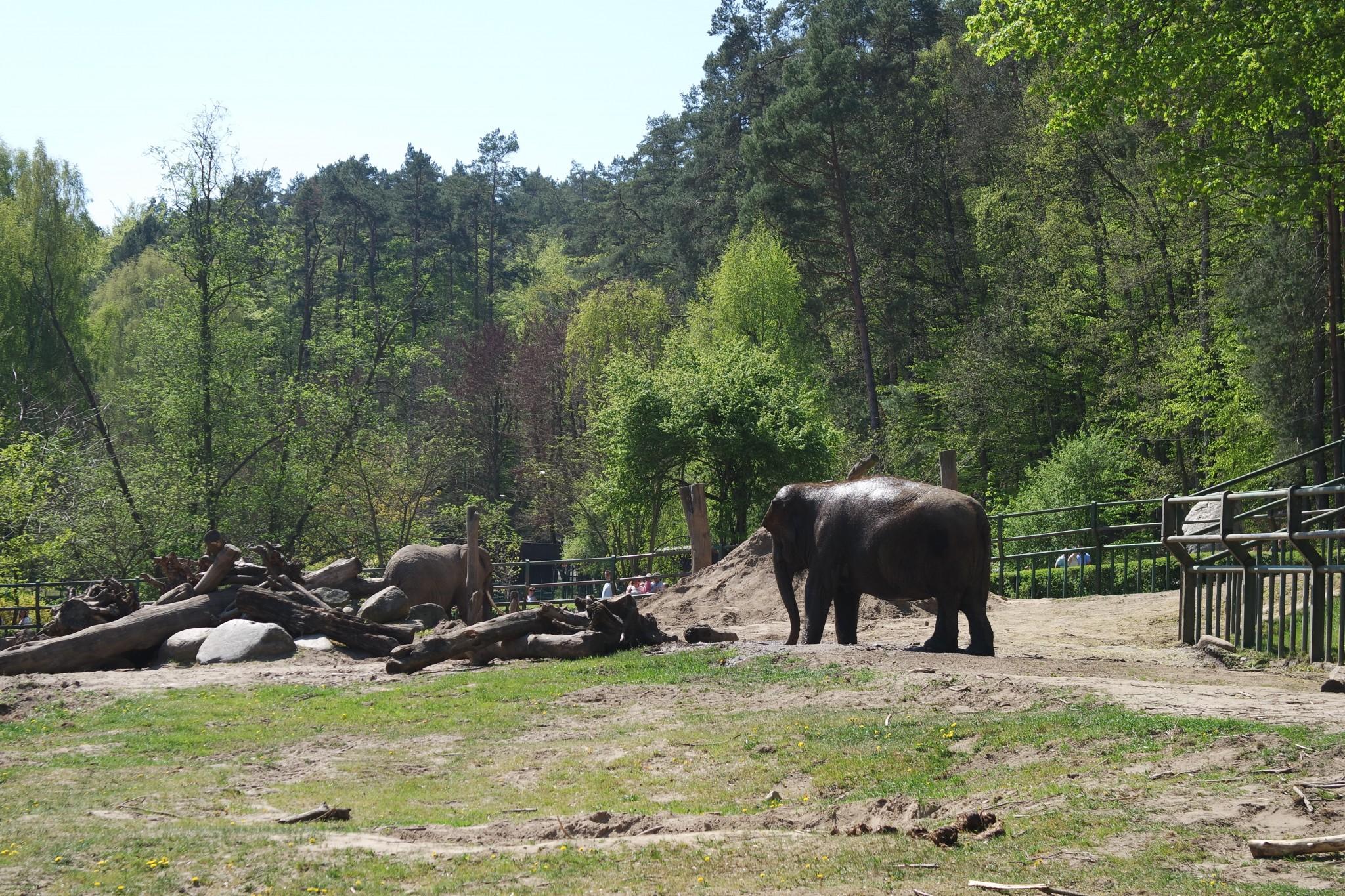 volier-so-slonami