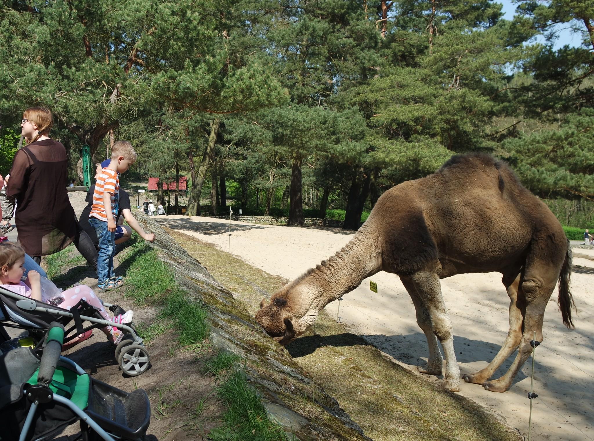 vtrblud-v-zooparke-gdanska