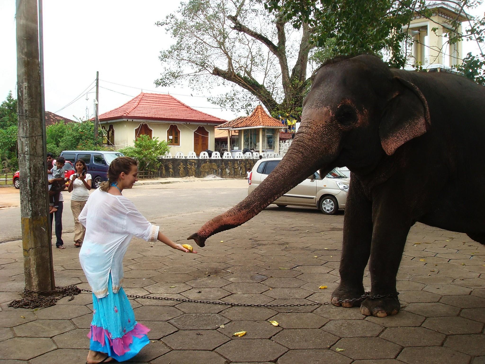 ceylonskiy-slon