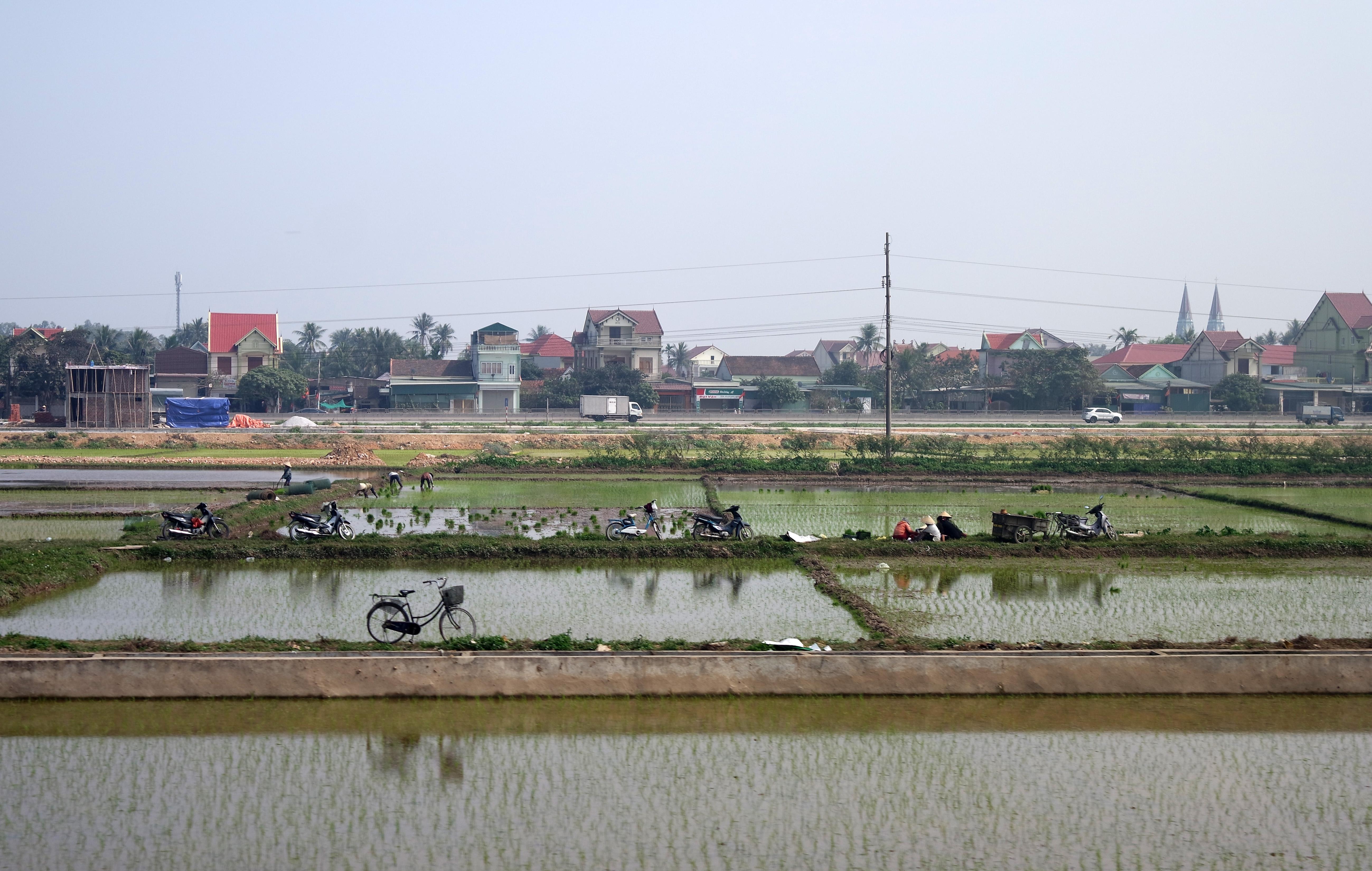 vietnam-ris