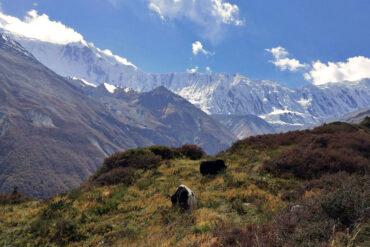 «Горняшка», лавины, молитвенные флаги, неисправные тормоза и сухопутные пиявки. Как поехать в Непал и не обломаться?