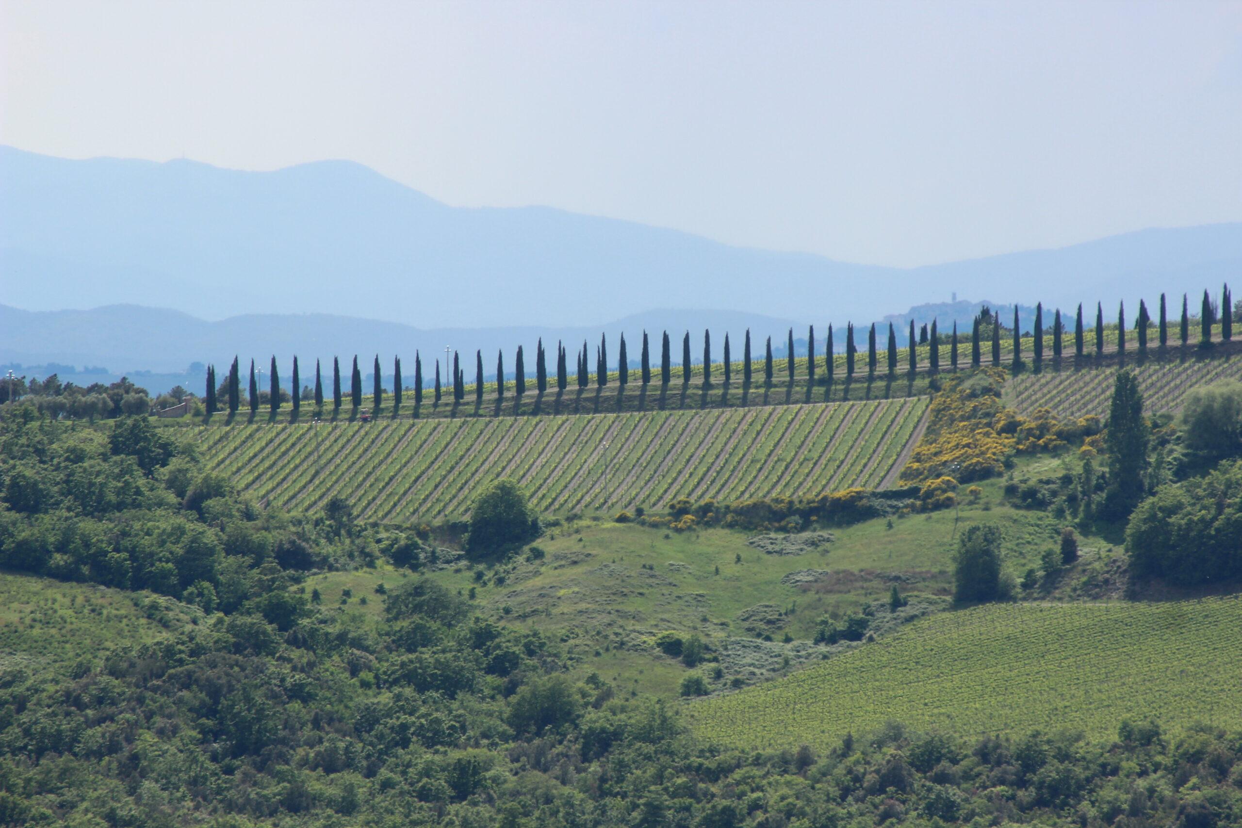 kiparisi-toskana-italiya