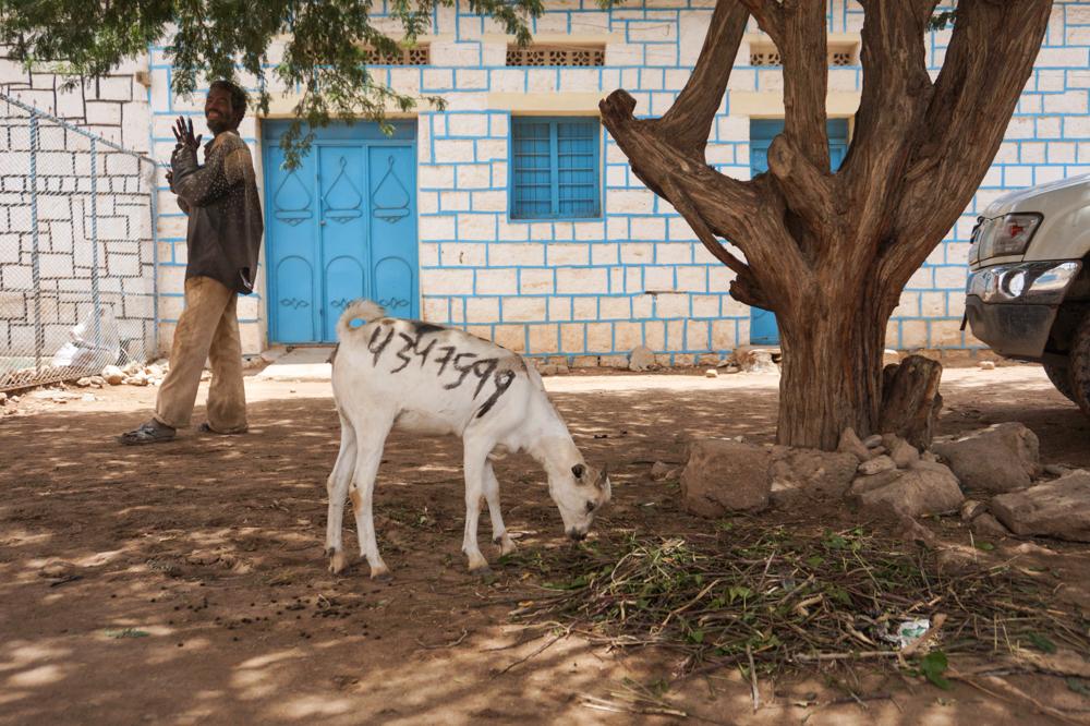 somalilend-goroda-foto