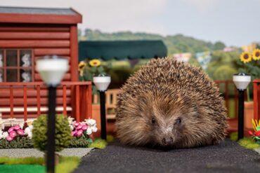 Hedgehog-Holiday-Park