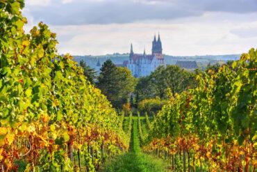 vinogradniki-germanii