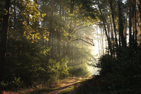 lesnie-progulki-audiogid