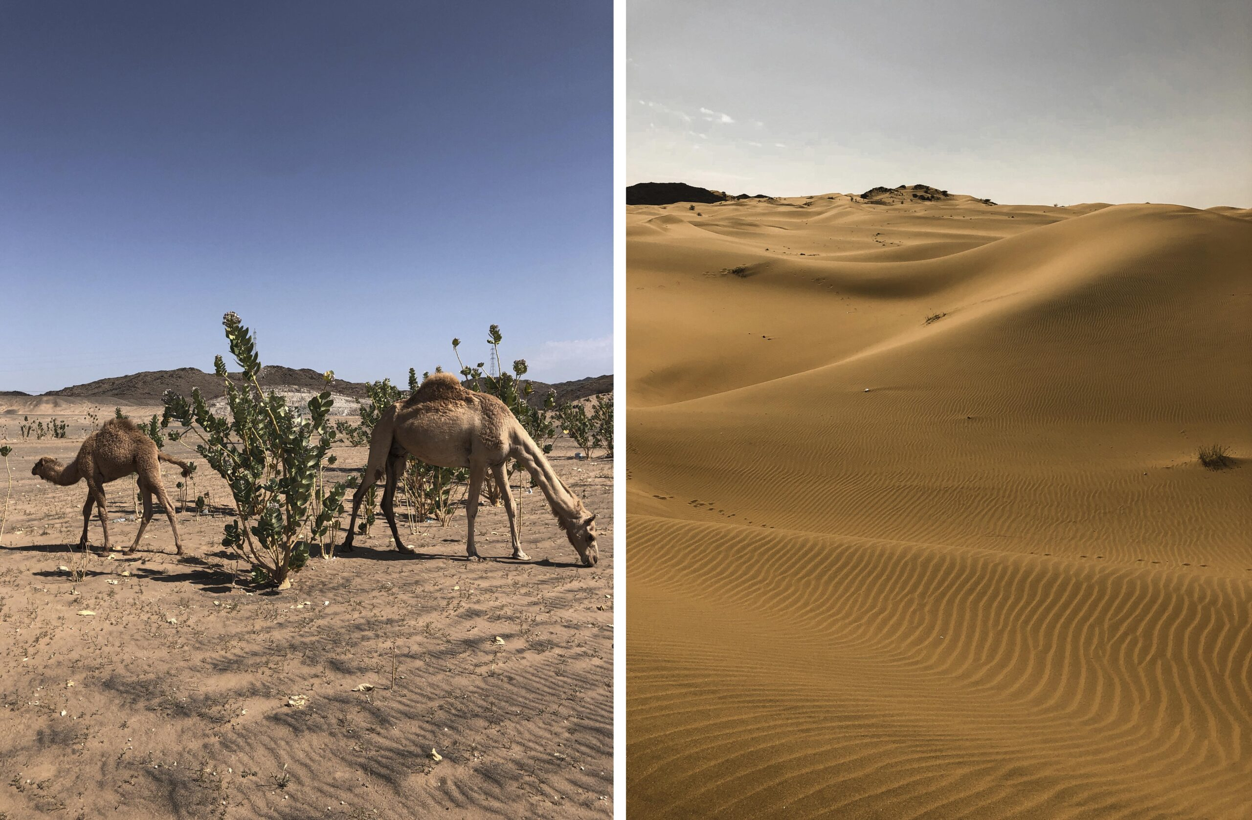 saudovskaya-aravia-pustina